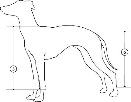 Dog Body Diagram